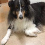 犬が関節痛に…(TT)