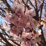 お花見日和♪♪♪