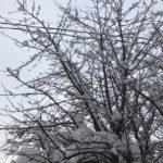 雪の中、講習へ行くのです。