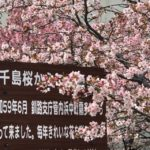 桜🌸が咲いた‼︎(*≧∀≦*)