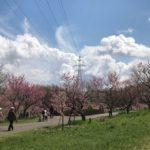 平岡公園の梅林へ〜