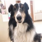 6月23日は愛犬類(ルイ)の誕生日でしたー!(≧∇≦)