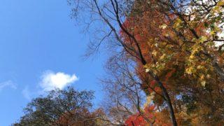 支笏湖の紅葉とチップの海鮮丼